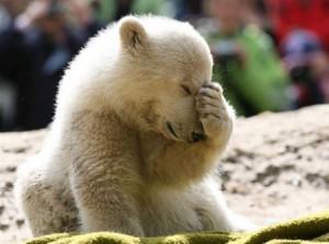 knut3 bear